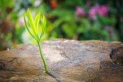 Croissance d'arbre Photo stock
