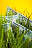 Croissance d'argent : billets d'un dollar dans l'herbe verte Image libre de droits