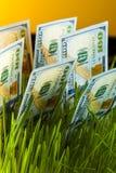 Croissance d'argent : billets d'un dollar dans l'herbe verte Photo libre de droits