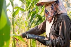 Croissance de enregistrement d'agriculteur féminin utilisant la technologie photo stock
