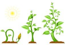 Croissance de plantes Photographie stock libre de droits