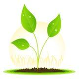 Croissance de plantes Photo libre de droits