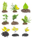 Croissance de plantes Photographie stock