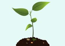 Croissance de plantes Image libre de droits