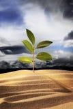 Croissance de plantes neuve Photos stock