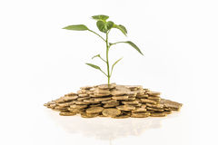 Croissance financière image stock