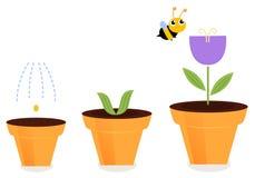 Fleur dans des étapes de croissance de pots illustration stock