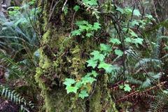 Croissance sur l'arbre photo libre de droits