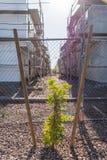 Croissance urbaine photo libre de droits