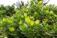 Croissance verte de jungle Images stock