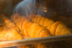 Croissant Baking in the Oven Stock Photography