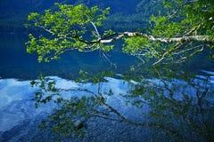 Croissant de lac photo stock