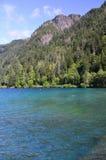 Croissant de lac Photographie stock