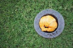 Croissant słuzyć w ogródzie Zdjęcia Royalty Free