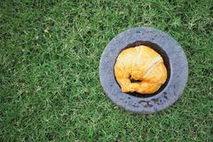 Croissant was served in the garden. Croissant in the dish was served in the morning Royalty Free Stock Photos