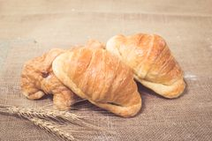 Croissants frais cuits au four image libre de droits