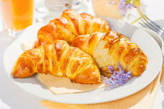 Croissants. Freshly baked french butter croissants on plate Stock Photography
