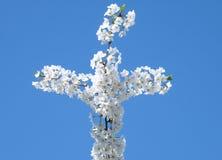 Croix 2010 de fleurs de cerise de Washington Photographie stock