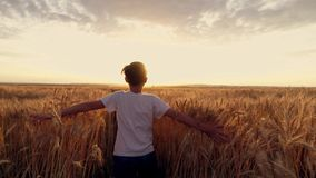 Croix courante de petite fille le champ de blé au coucher du soleil Mouvement lent banque de vidéos