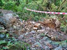 Crollo dell'albero dopo il tifone immagini stock