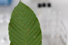 A cromatografia é usada para separar componentes de uma planta imagem de stock royalty free