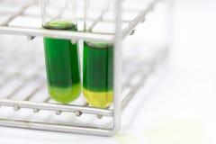 A cromatografia é usada para separar componentes de uma planta fotos de stock