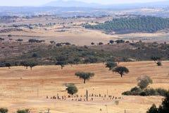 cromeleque在葡萄牙xerez附近执行monsaraz 免版税库存照片