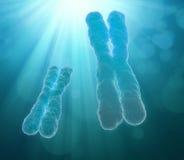 Cromosoma stock de ilustración