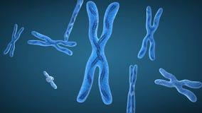 Cromosoma x e hilos de la DNA ilustración del vector