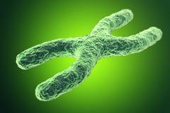 Cromosoma X su fondo verde con effetto di profondità di campo, concetto scientifico illustrazione 3D Fotografia Stock