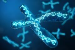 cromosomi X dell'illustrazione 3D con DNA che porta il codice genetico Concetto della genetica, concetto della medicina Futuro, g illustrazione vettoriale
