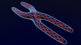 Cromossoma X 3d rendem Imagem de Stock Royalty Free