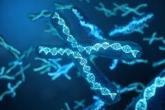 cromossomo x da ilustração 3D com o ADN que leva o código genético Conceito da genética, conceito da medicina Futuro, genético ilustração stock