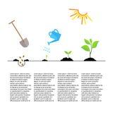 Cronologia infographic di piantatura del processo dell'albero Fotografia Stock