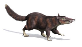 Cronopio -史前哺乳动物 免版税库存图片