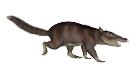 Cronopio dentiacutus, prehistoric mammal - 3D render Stock Image