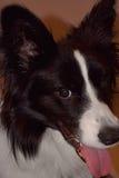 Cronos-Hund lizenzfreies stockfoto