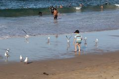 Cronulla Beach-The little boy played with the seagulls stock image