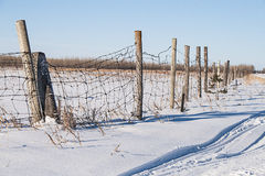 Crooked barbwire fence in winter Royalty Free Stock Photos