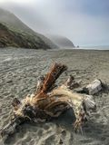 Crooked dry timber on the beach Royalty Free Stock Photography