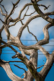 Crooked and dry tree with branches without leaves.  stock images