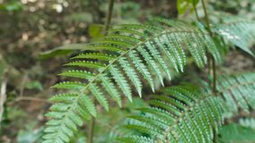 Crooked fern branches. In Khao Yai national park, Thailand stock video