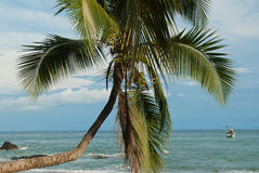 Crooked Palm tree Ocean Scene Royalty Free Stock Photography