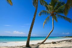 Crooked Palm Tree on tropical beach Stock Images