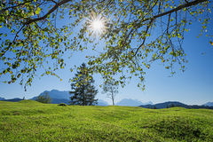 Crooked pasture in the bavarian alps, bright springtime landscap Royalty Free Stock Photos