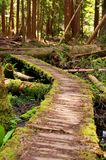 Crooked Path. A crooked wooden path makes its way through the wood royalty free stock photo