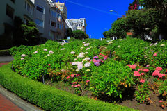 Crooked Street Gardens. Lombard Street Gardens, crooked street in San Francisco royalty free stock photography