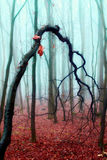 Crooked tree in a foggy autumn forest Stock Images