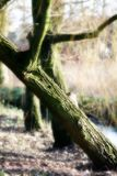 Crooked tree in the park royalty free stock image