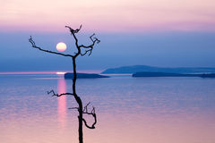 Crooked tree and a small island on sunrise background. Royalty Free Stock Photos